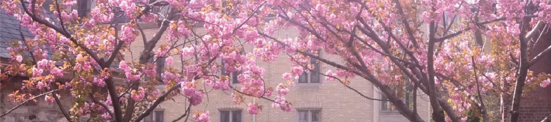 Image depicts flowers in bloom on campus