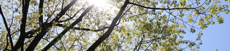 Image depicts the sun shining through the trees