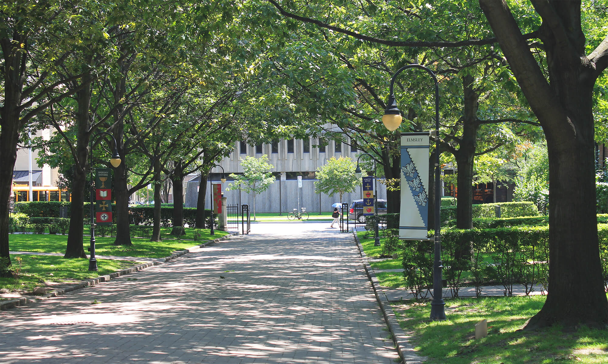 St Michaels Campus - The image depicts a tree lined street with sun coming through the canopy of trees.