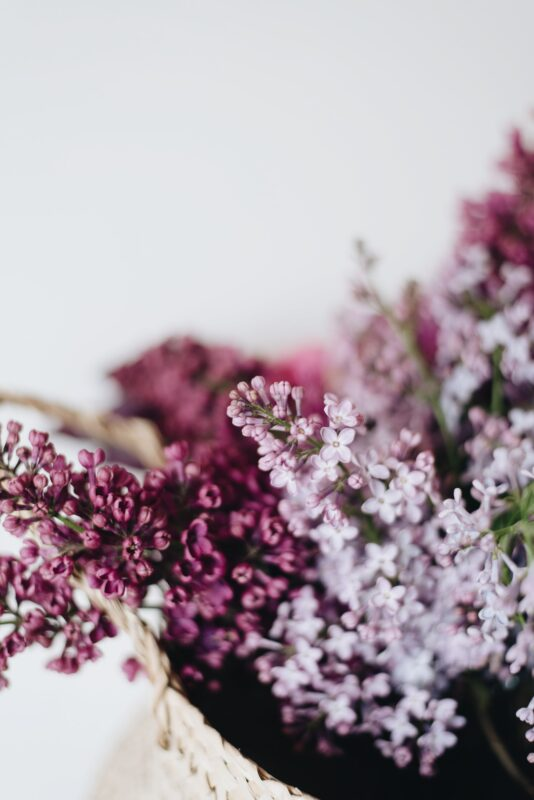 Photograph of lilacs in a basket
