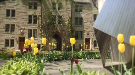 Rows of tulips surrounding the St. Michael statue on the quad at the University of St. Michael's College