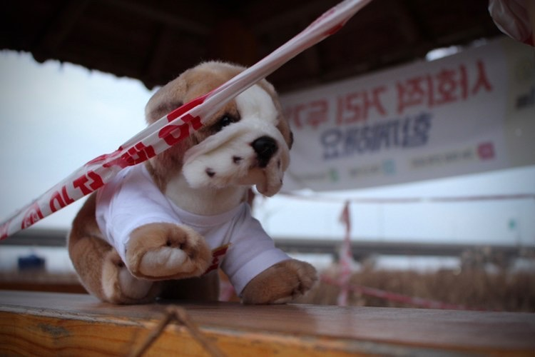 Photograph of the Basil the bulldog plushie in front of a sign with Korean writing.
