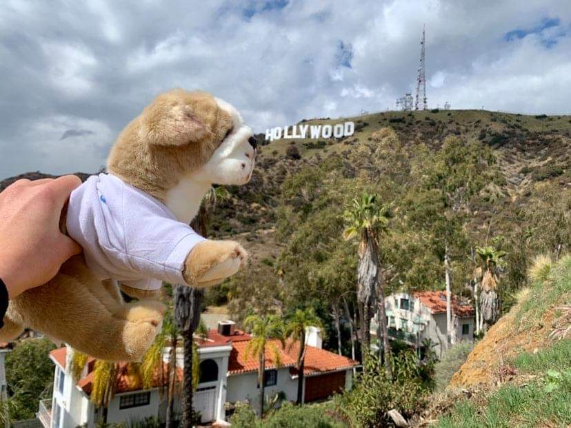 Photograph of a hand holding up the Basil the bulldog plushie to the Hollywood sign in the background.